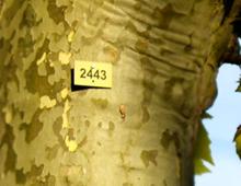 Identification des arbres de Mulhouse